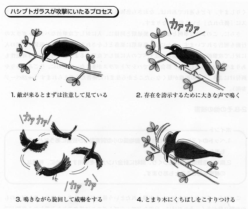 カラス 鳴き声 種類